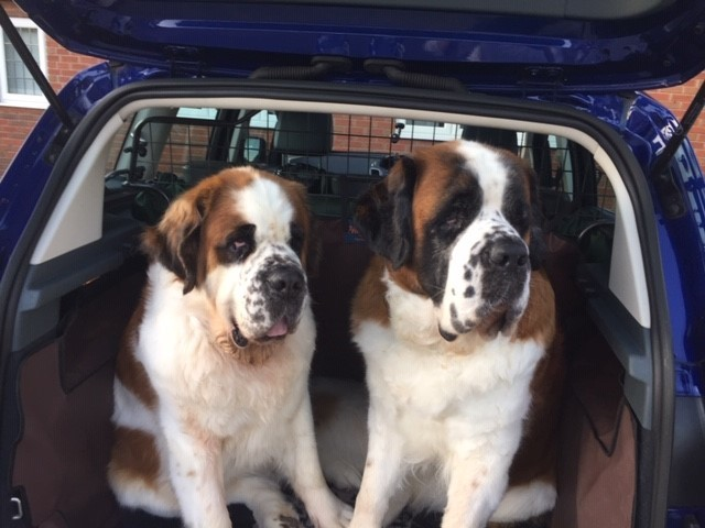 Finding the perfect dog guard for your car