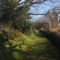 Dog-friendly inn and B&B near Chard, Somerset - Somerset dog friendly B&B and dog walk