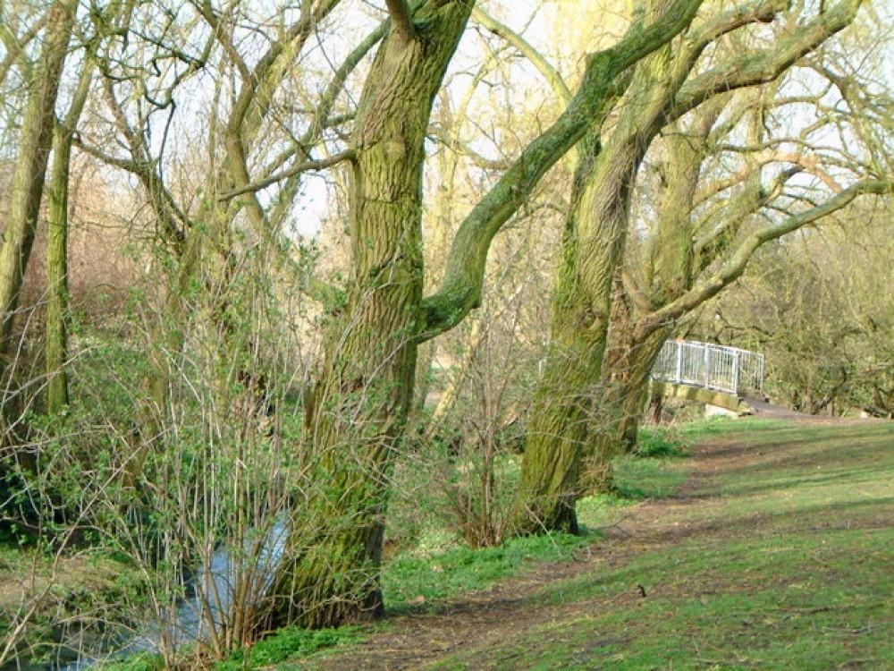 Knighton dog walk near Oadby, Leicestershire - Knighton Park dog walk Leicester