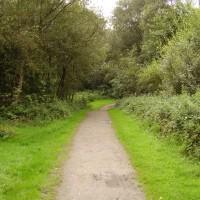 M6 Junction 21 dog walk, Cheshire - Dog walks in Cheshire