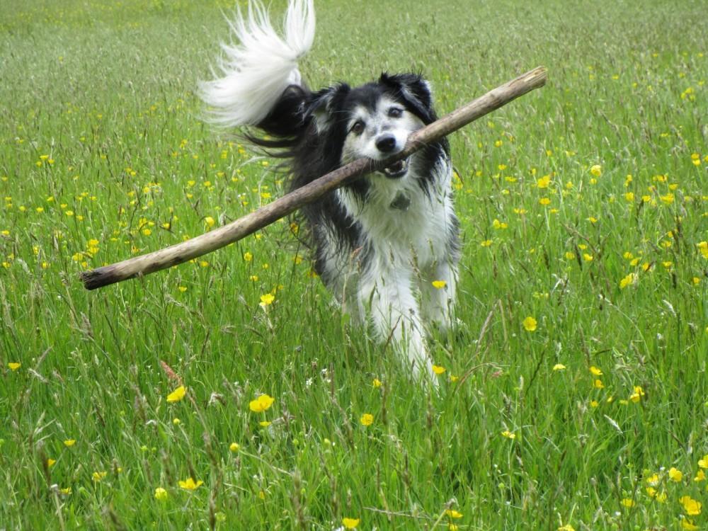 A396 Riverside walkies and swimming, Devon - Devon dog walk and dog-friendly pub.JPG