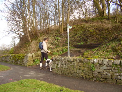 Moorland dog walk and dog-friendly pub near Bakewell, Derbyshire - Driving with Dogs