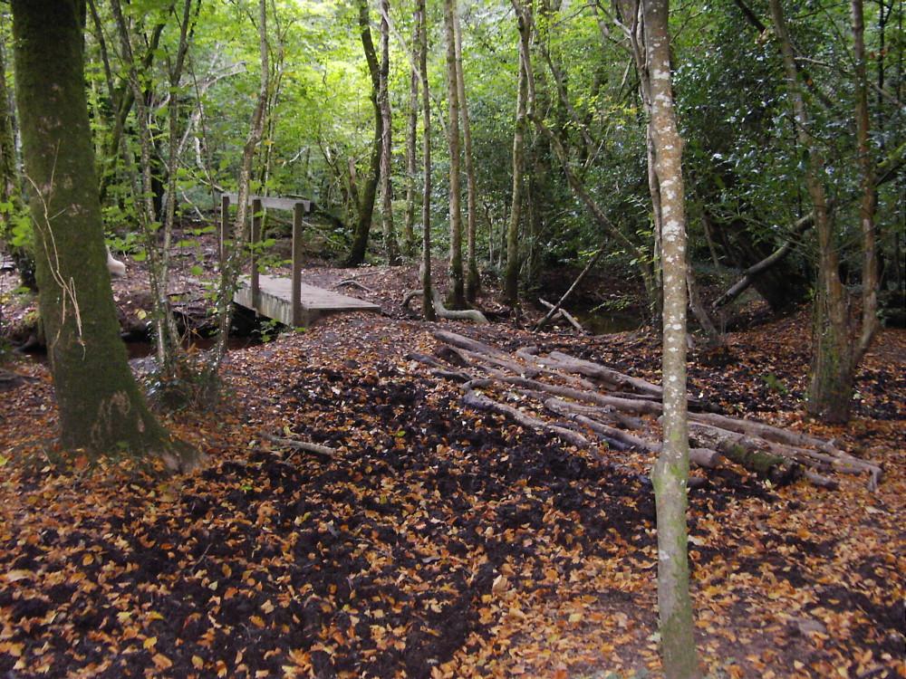 Kings Wood dog walk, Cornwall - Dog walks in Cornwall