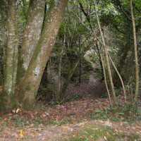 Kings Wood dog walk, Cornwall - Dog walks in Cornwall
