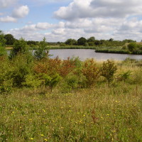M4 Junction 6 or 7 Wetlands dog walk, Berkshire - Dog walks in Berkshire