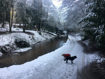 Sunnyhurst in winter.jpg - Driving with Dogs