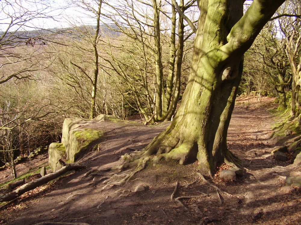 Black Rocks dog walk near Cromford, Derbyshire - Dog walks in Derbyshire