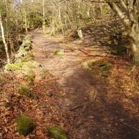 Black Rocks dog walk near Cromford, Derbyshire - Dog walks in Derbyshire