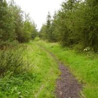 M6 Junction 26 Beacon Country Park dog walk, Lancashire - Dog walks in Lancashire