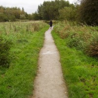 Shevington local dog walk, Lancashire