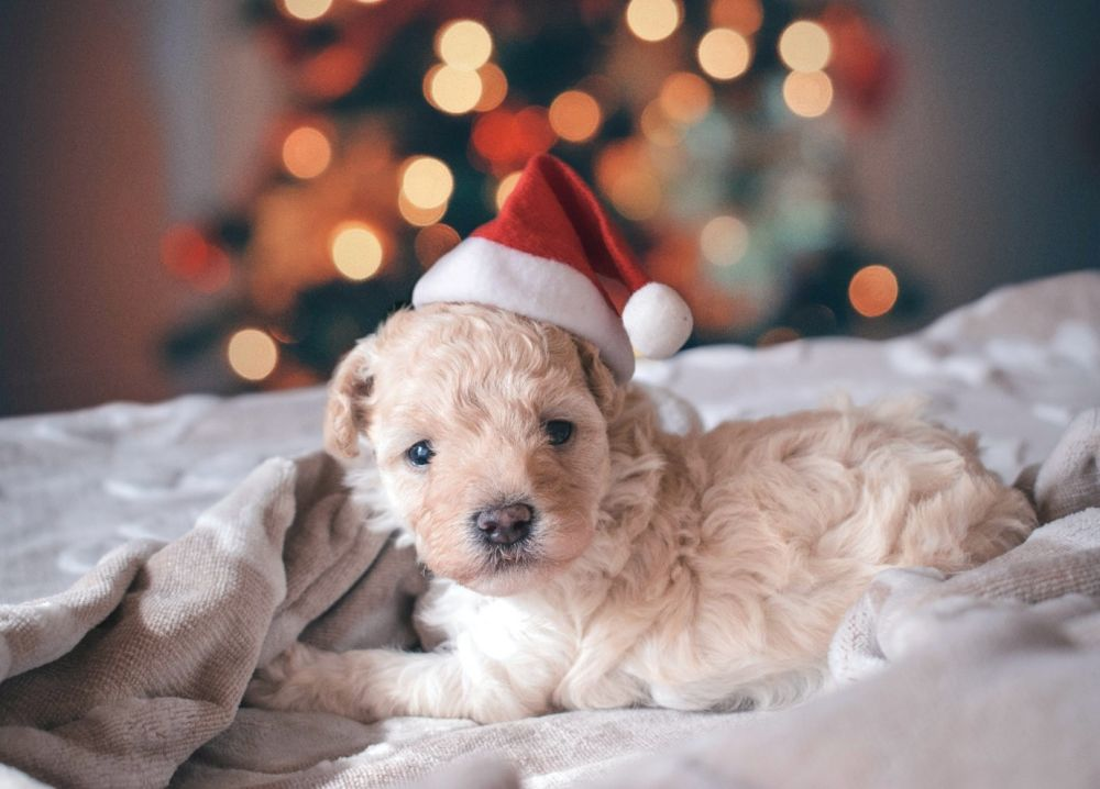 4 festive ways to commemorate your pet's first Christmas