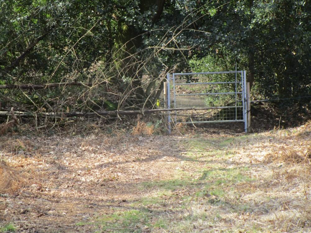 A272 Dog walk on the common near Midhurst, West Sussex - Sussex dog walks.JPG
