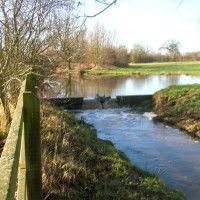 Southwick Country Park dog walk, Wiltshire - Wiltshire dog walk