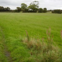 Shevington local dog walk, Lancashire - Dog walks in Lancashire