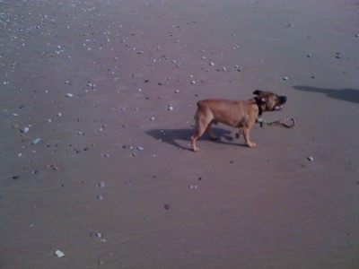 Towyn dog-friendly beach near Rhyl, Wales - Driving with Dogs