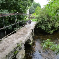 Pennine Way dog-friendly pub and walk, Yorkshire - Yorkshire dog walk and dog-friendly pub