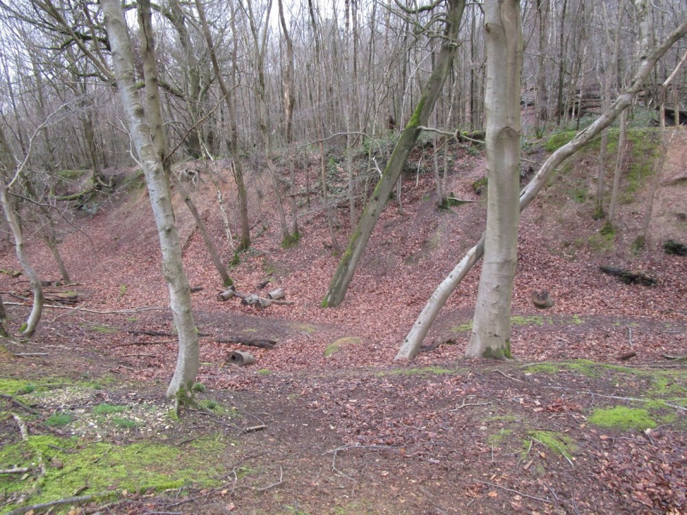 Woodland dog walk near Chartwell, Kent - Kent dog walks.JPG