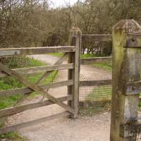 Riverside dog walk, swimming and dog-friendly pub, Derbyshire - Image 8