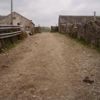 Lathkill Dale short dog walk, swimming and dog-friendly pub, Derbyshire - Image 14
