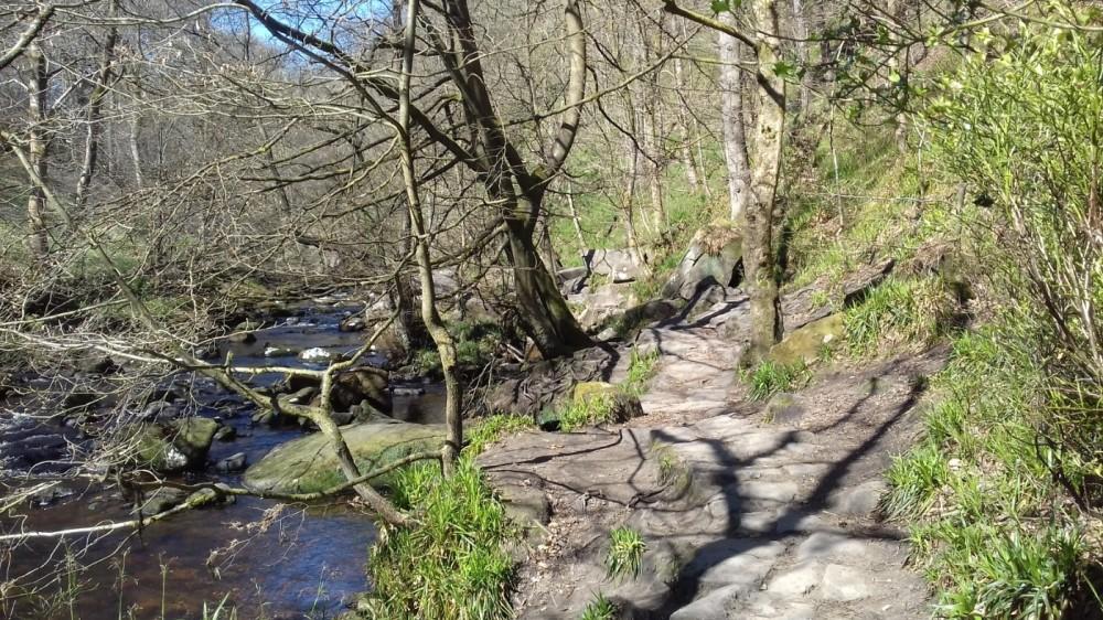 Hardcastle Crags dog walks, West Yorkshire - 20190411_131645.jpg