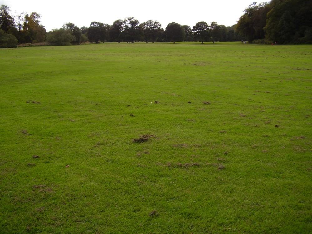 M6 Junction 31 dog walks near Blackburn, Lancashire - Dog walks in Lancashire