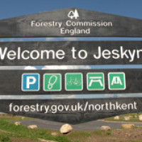 Jeskyns Community Woodland and Greenspace dog walk, Kent - Dog walks in Kent