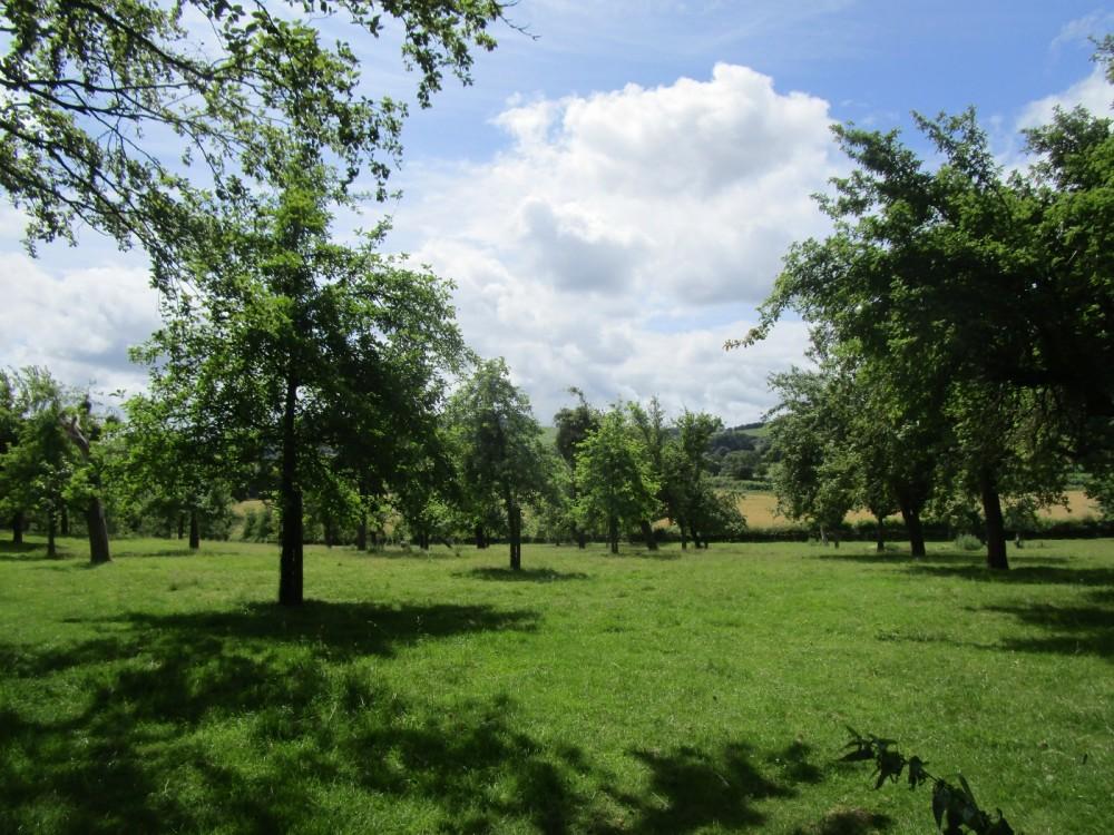 A438 dog walk and dog-friendly pub in cider country, Herefordshire - Herefordshire dog-friendly pub and dog walks.JPG