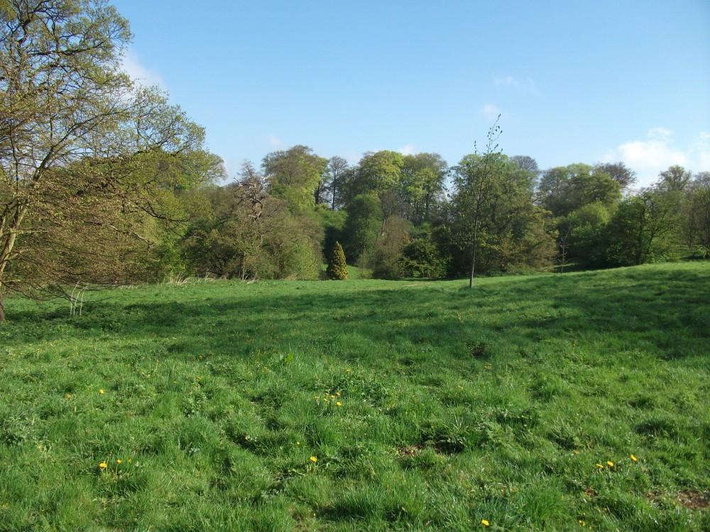 East Carlton Park dog walk, Northamptonshire - Dog walks in Northamptonshire