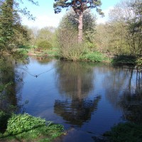 East Carlton Park dog walk, Northamptonshire - Dog walks in Northamptonshire