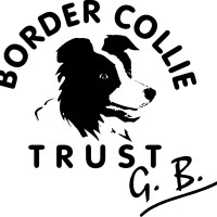 bordercollietrustgb - Driving with Dogs