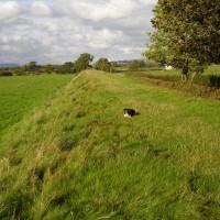 Grimsargh dog walk, Lancashire - Dog walks in Lancashire