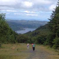 Woodland dog walk and lake view, Cumbria - Lake district dog walks.jpg
