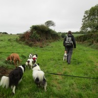 Coast dog walk and dog-friendly cafe, Wales - Mid-Wales dog walk and dog-friendly cafe