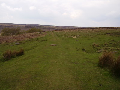 Big Moor dog walk, Derbyshire - Driving with Dogs
