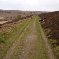 Big Moor dog walk, Derbyshire - Dog walks in Derbyshire