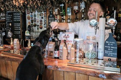 Dog-friendly pub near Simonsbath, Devon - Driving with Dogs