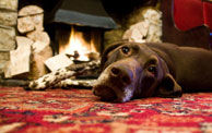 Morecombe Bay dog-friendly pub, Cumbria - Driving with Dogs