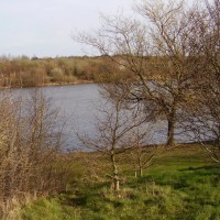 Sandwell Valley dog walk, West Midlands
