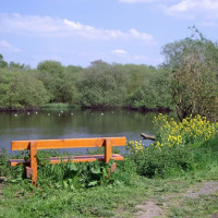 Kingsbury Water Park dog walks, Warwickshire - Dog walks in Warwickshire