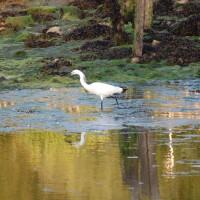 Yar Estuary Circular Walk, Yarmouth, Isle of Wight - Dog walks on the Isle of Wight