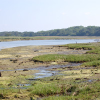 Yar Estuary Circular Walk, Yarmouth, Isle of Wight - Dog walks on the Isle of Wight
