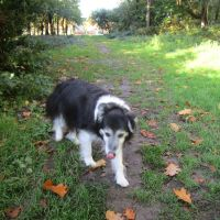 M4 dog-friendly pub and dog walk near Newbury, Berkshire - Berkshire dog-friendly pub and dog walk