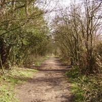 M5 Junction 3 Woodgate dog walks, West Midlands - Dog walks in the West Midlands