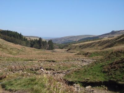 A697 Dog walks in the hills, Northumberland - Driving with Dogs