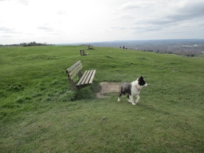 Dog walks through history and finds the start of the English nation, Wiltshire - Driving with Dogs