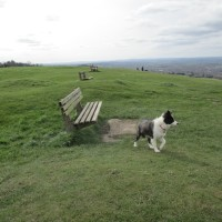 Dog walks through history and finds the start of the English nation, Wiltshire - Wiltshire dog walks..JPG