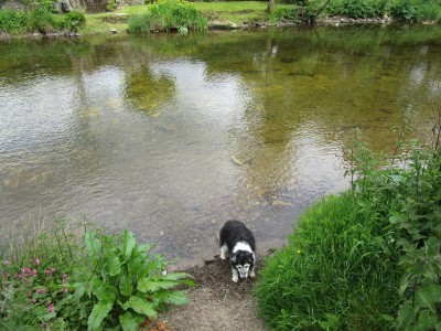A396 riverside pub with doggie swimming, Somerset - Driving with Dogs