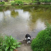 A396 riverside pub with doggie swimming, Somerset - Somerset dog-friendly pub with dog walk.JPG
