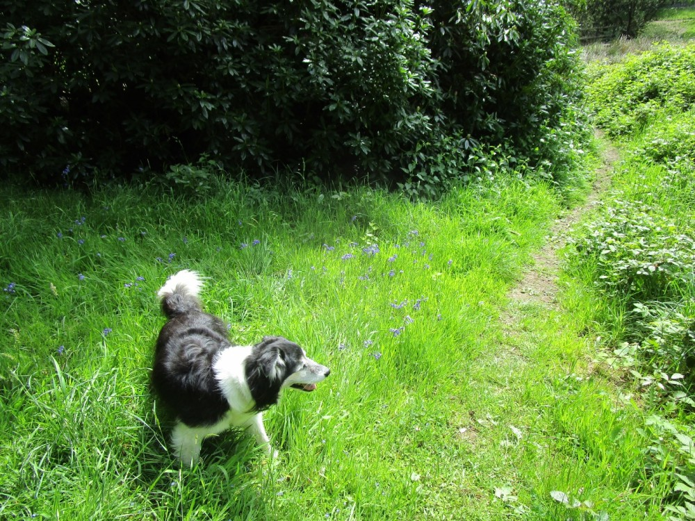 A382 Waterside dog walk, Devon - Devon dog walking places.JPG