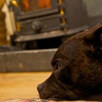 Quantock Cottages - dog-friendly, Somerset - 9s-luxury-dog-friendly-cottage-the-quantock-hide.jpg